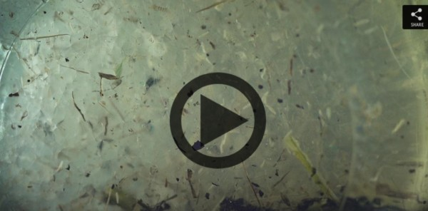 Microplastics found to permeate the ocean's deepest points