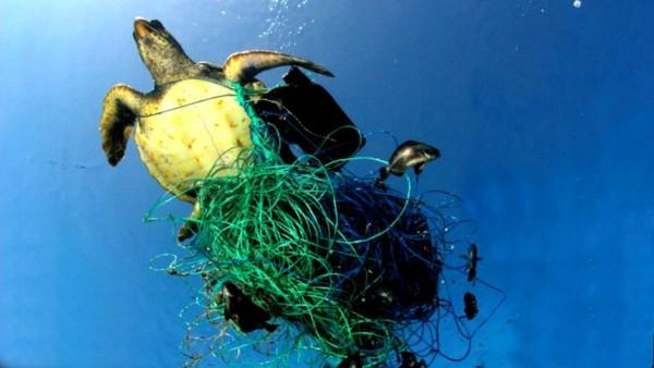 GreenDoc: A Plastic Ocean